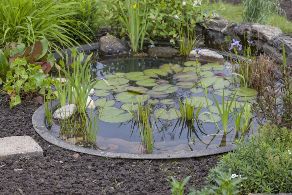 12. Garden Pond Planting