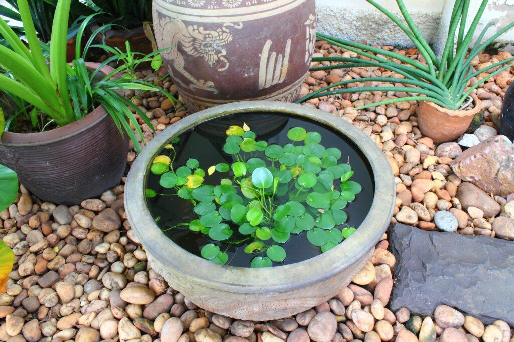 2. Small Garden Pond