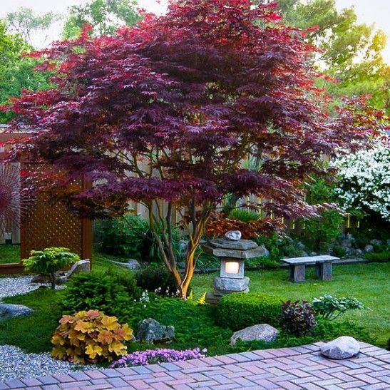 22. Japanese Maple Garden