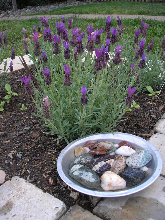 23. Tiny Garden Pond