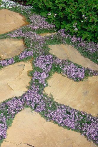 28. Garden Path Planting
