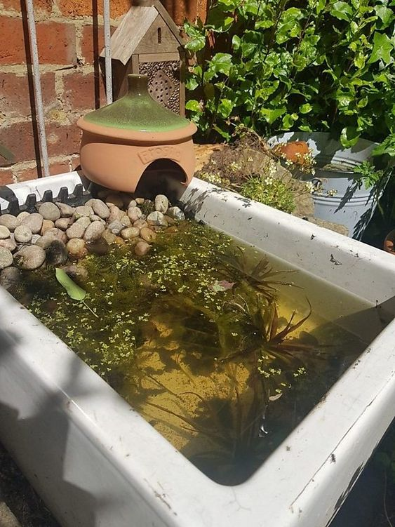28. Small Garden Wildlife Pond