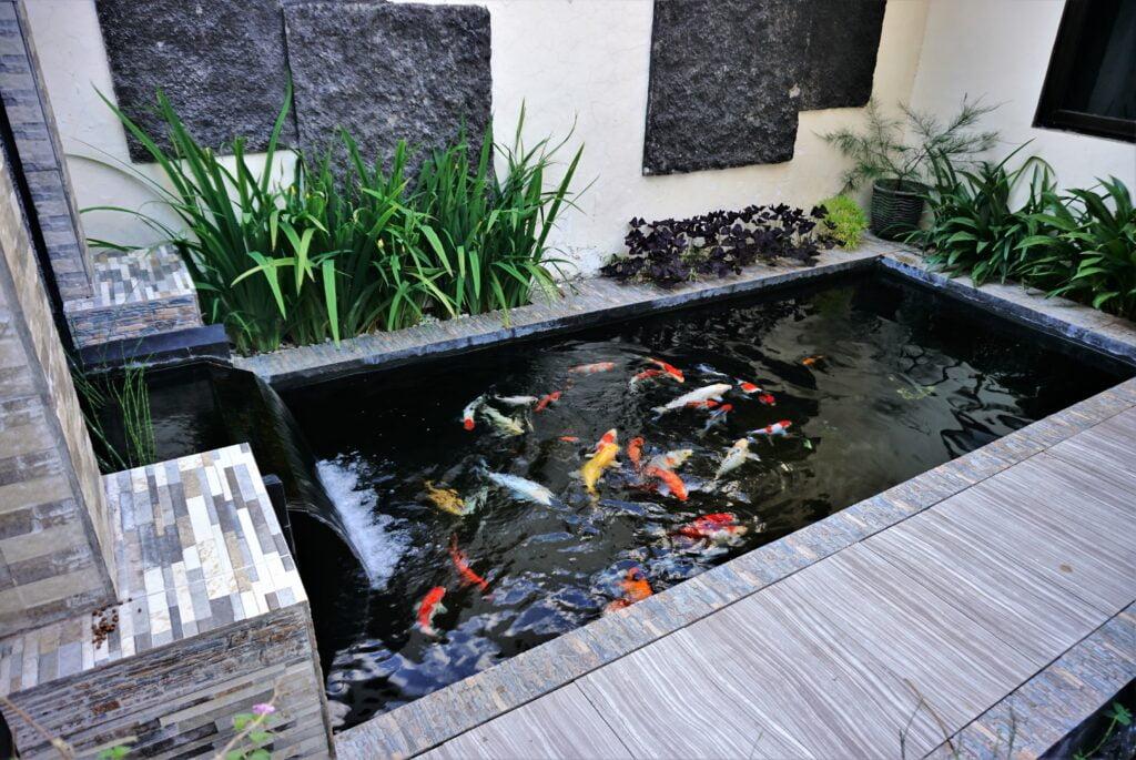 7. Garden Fish Pond
