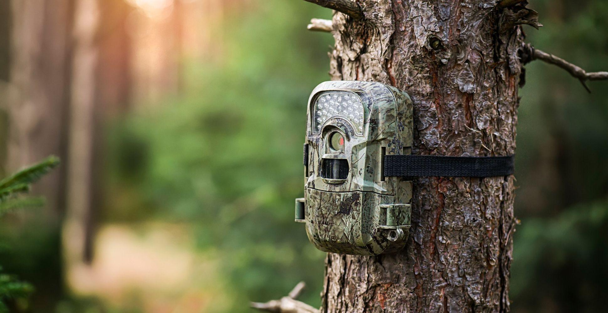 best-budget-trail-camera