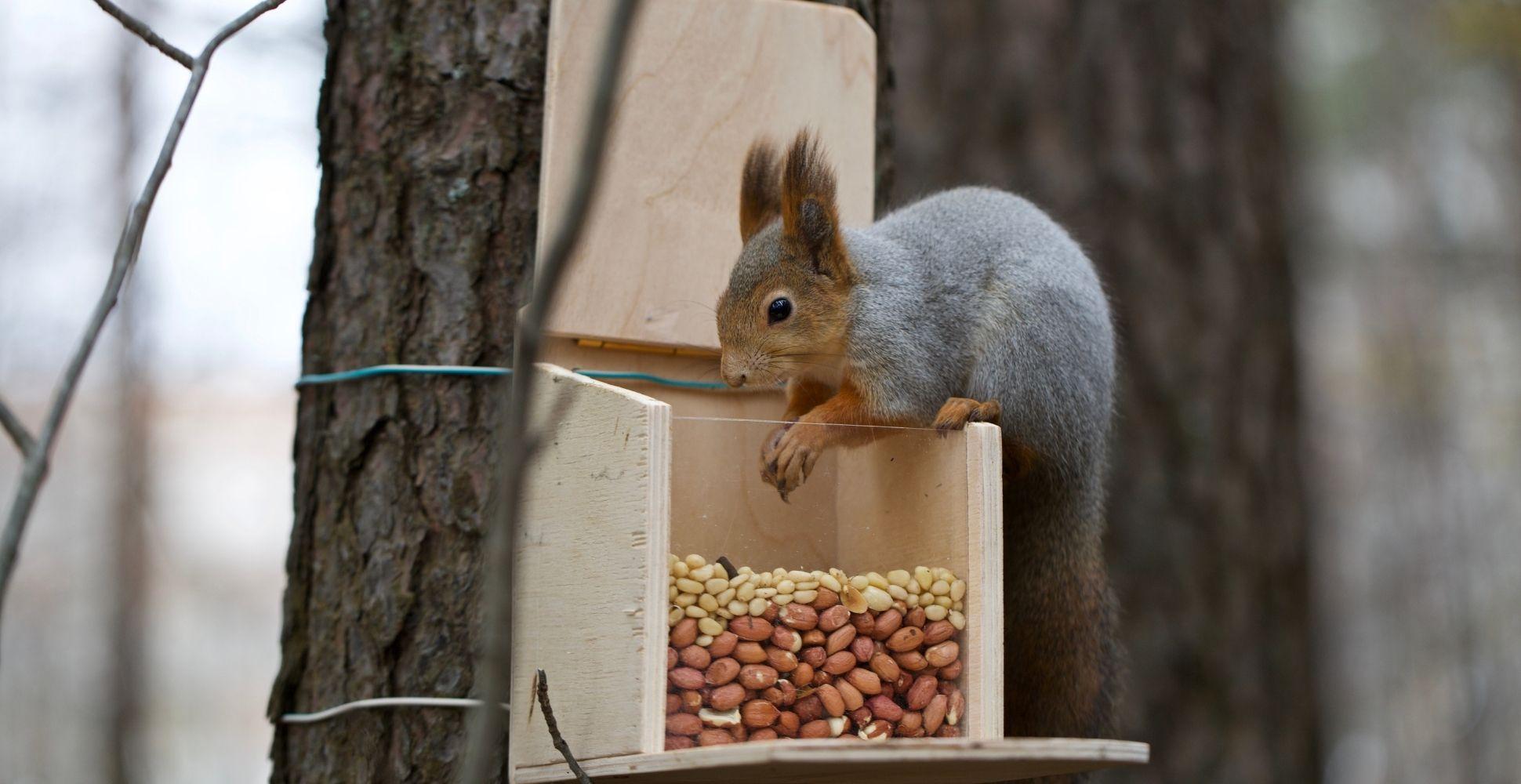 best-squirrel-feeder
