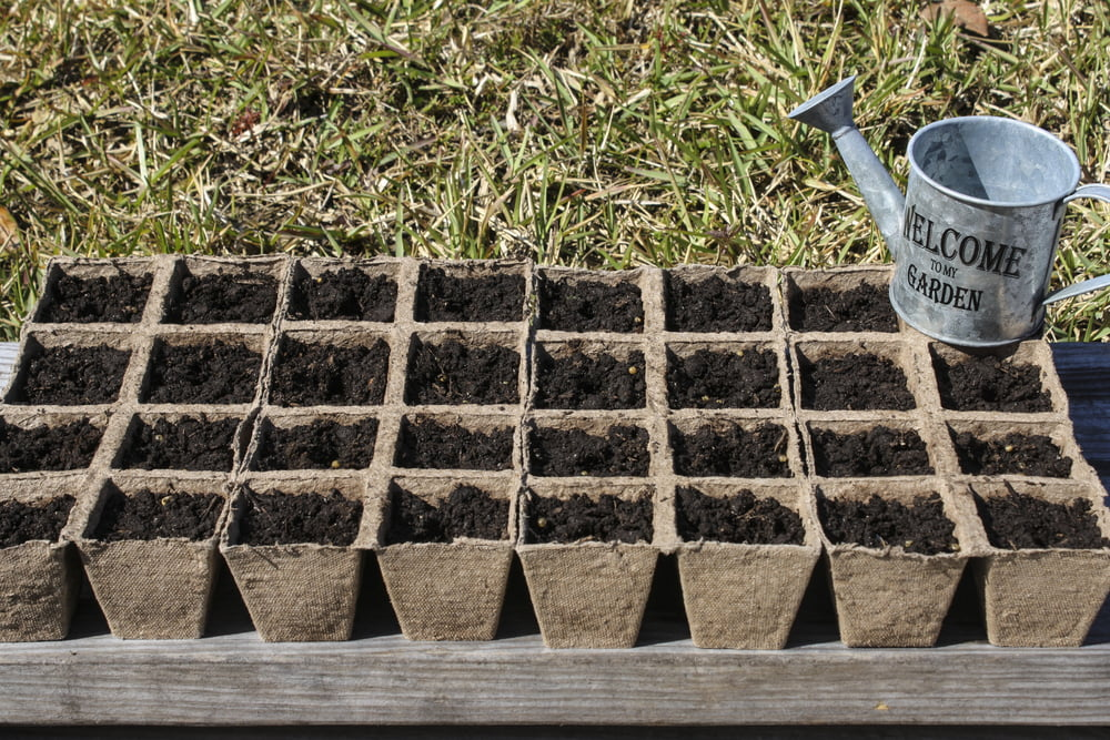 Small pots with compost