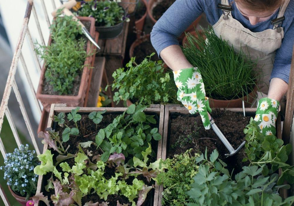 balcony-garden-vegetable