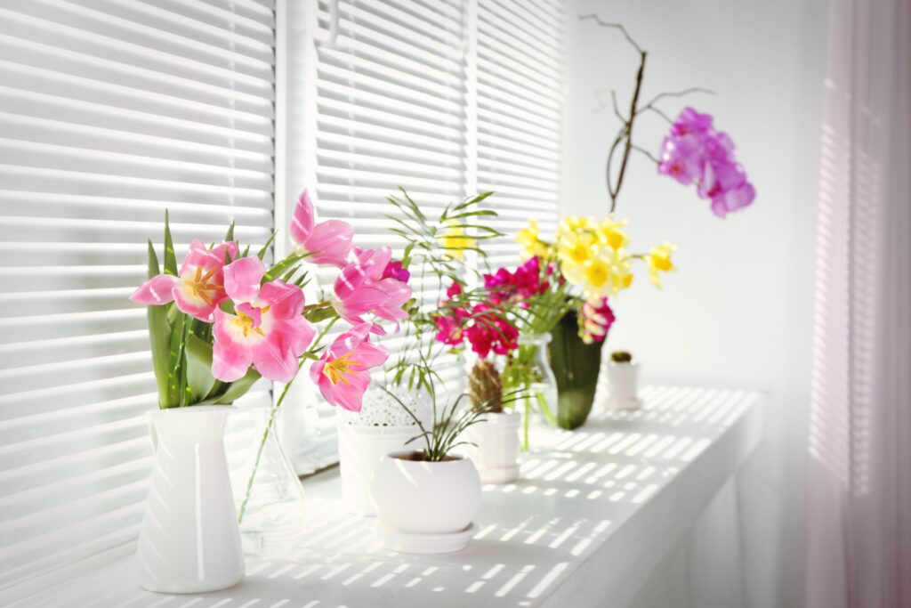 colourful-flowers-and-houseplants