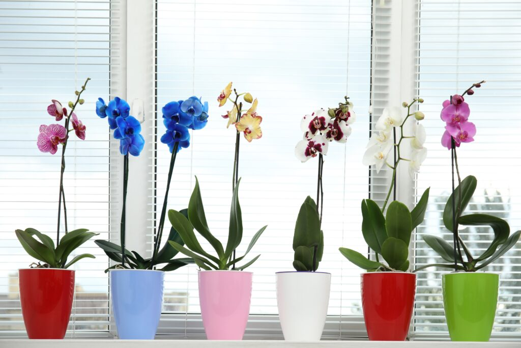 colourful-tropical-orchid-flowers