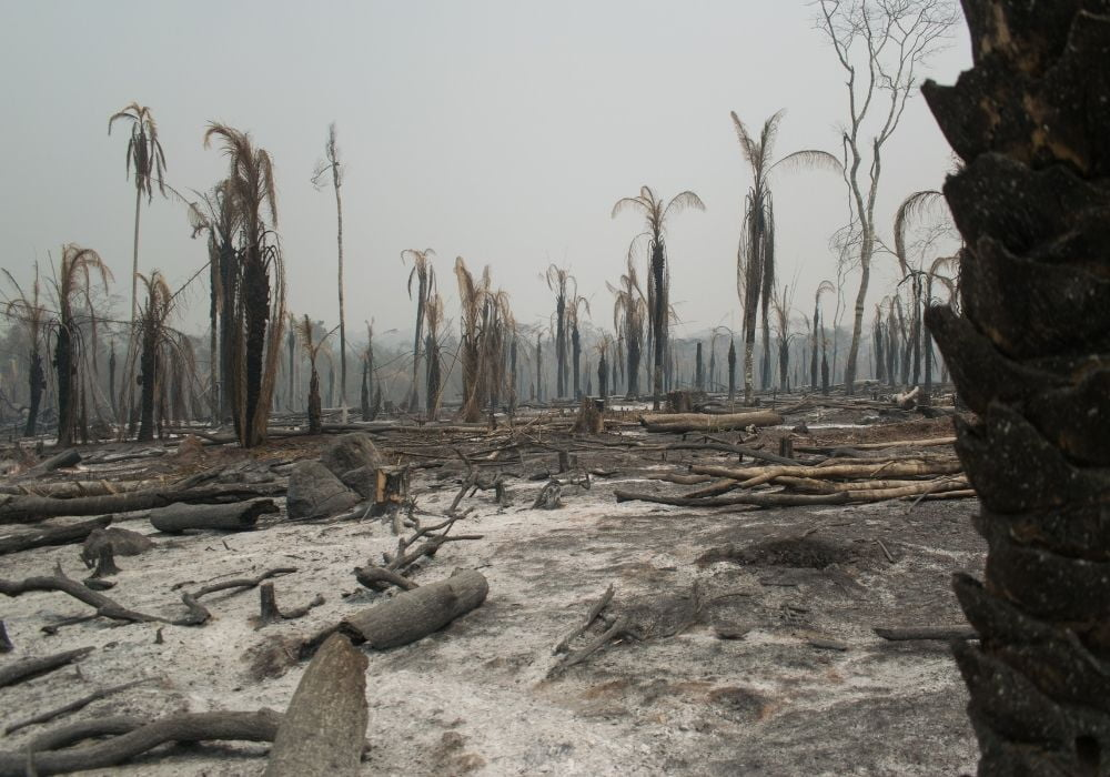 deforestation-loss-of-biodiversity