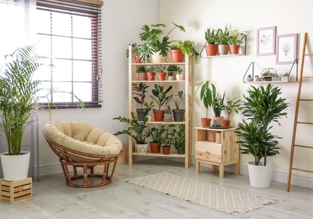 room-interior-with-indoor-plants