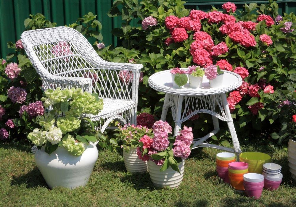 small-garden-blooming-hydrangea