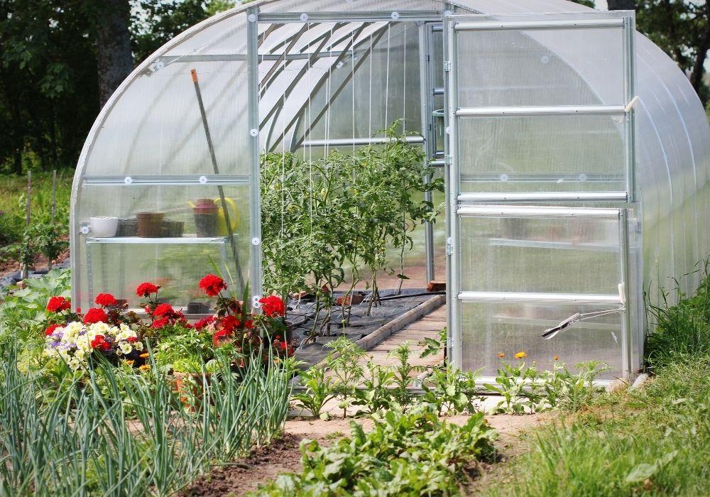 greenhouse-in-back-garden