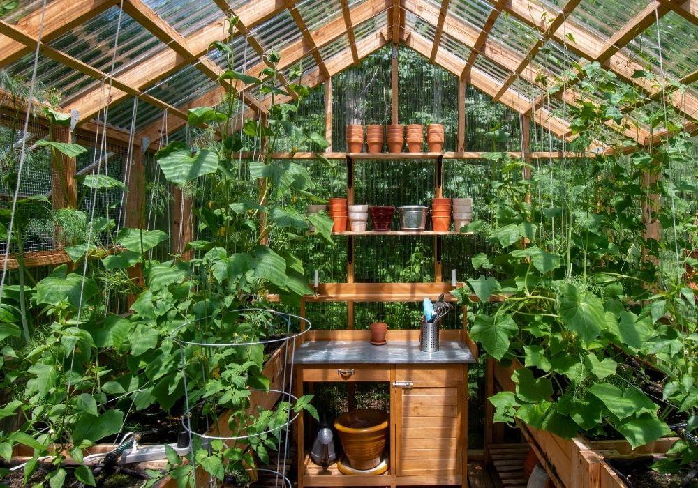 wooden-greenhouse-interior