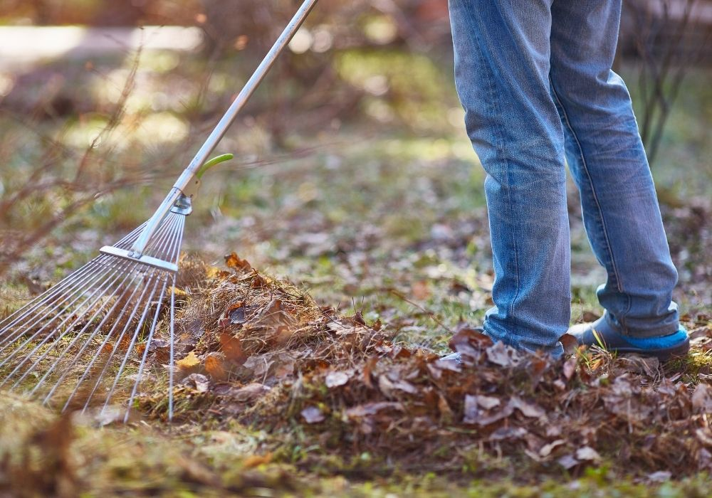 garden-spring-cleaning-raking-leaves