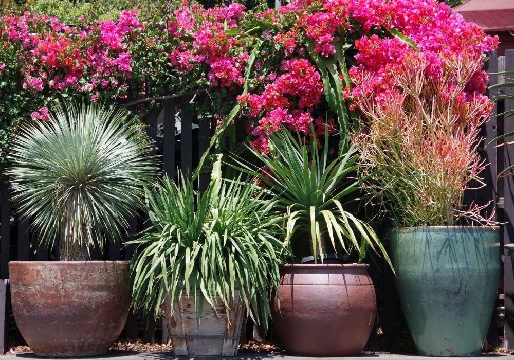 large-planter-pots-in-front-of-a-wooden-fence