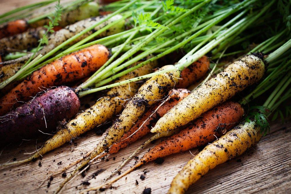 Different carrot varieties