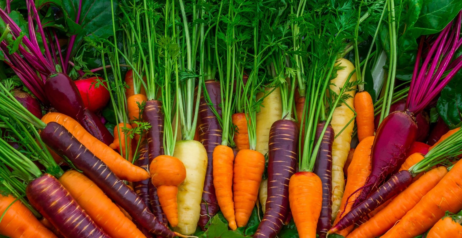 Colourful carrots