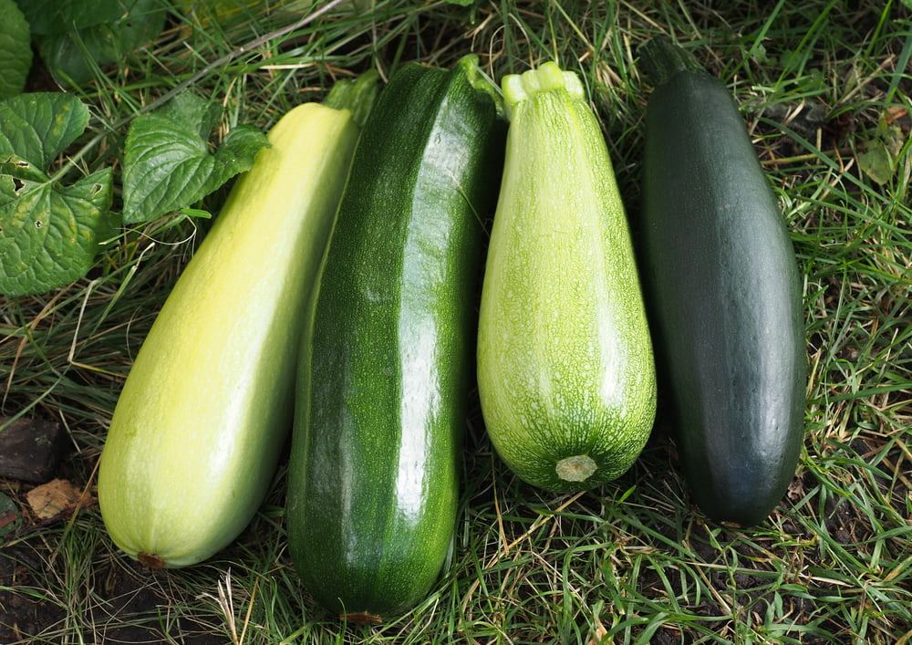 Different courgette varieties