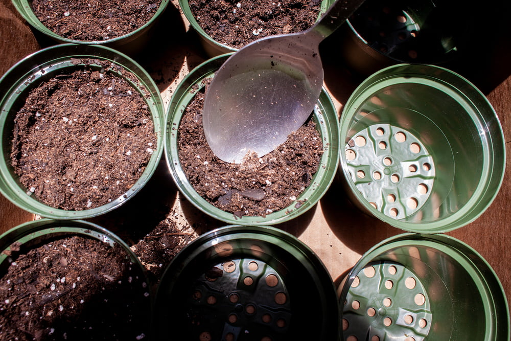 Plant pots with soil