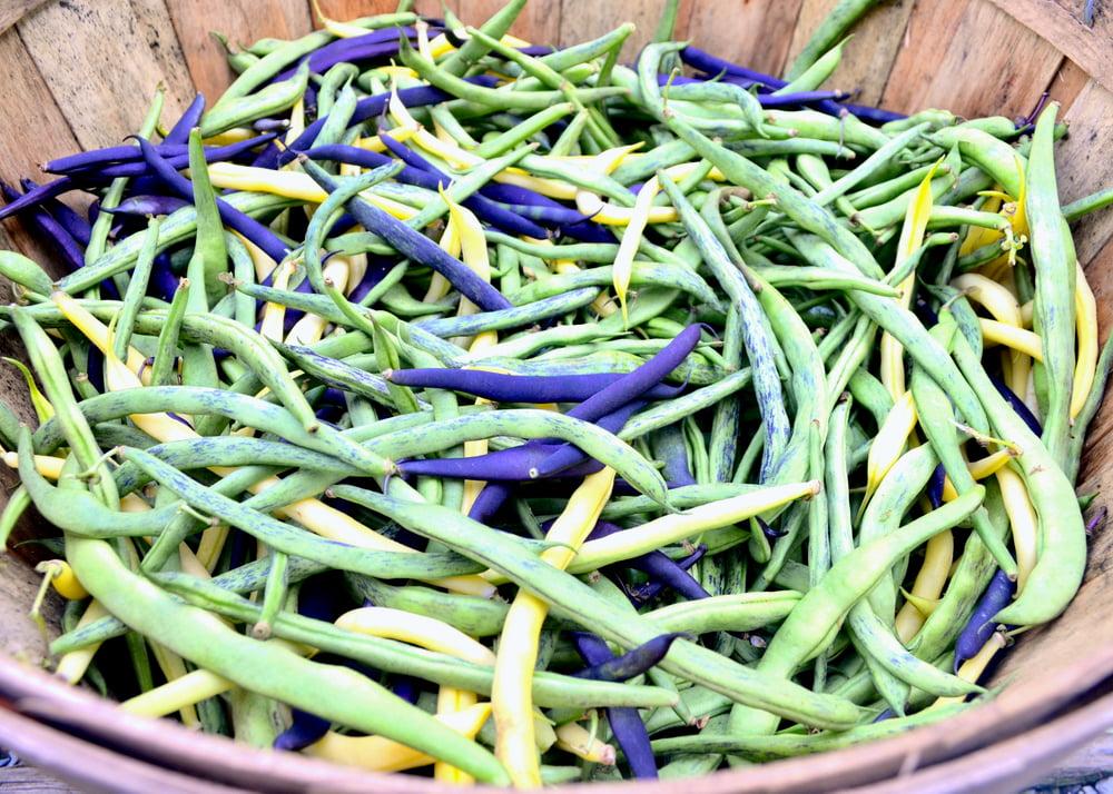 Runner bean varieties