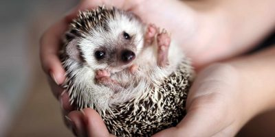 animal-wildlife-rescue-guide